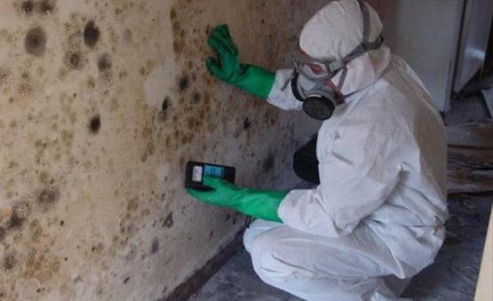 Mold Removal Phoenix