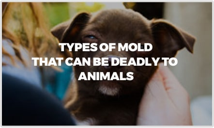 Types Of Mold