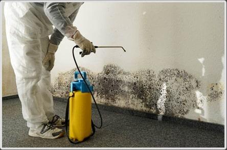 Mold Remediation Matters