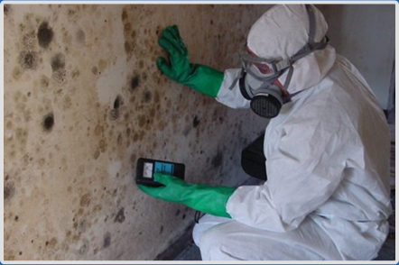 Effects of Mold on Human Health