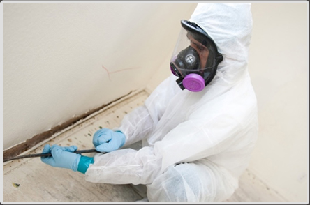 Choose a Mold Removal Company